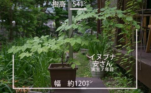20180530inubuna_7y_an_00.jpg