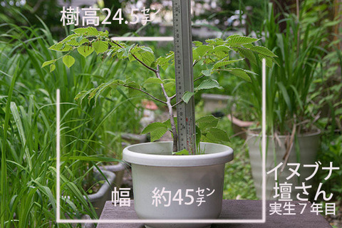 20180530inubuna_7y_dan_00.jpg