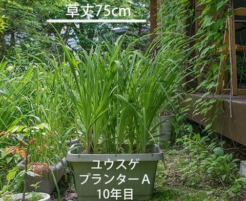 20180609yusuge_planter_10y_A01.jpg