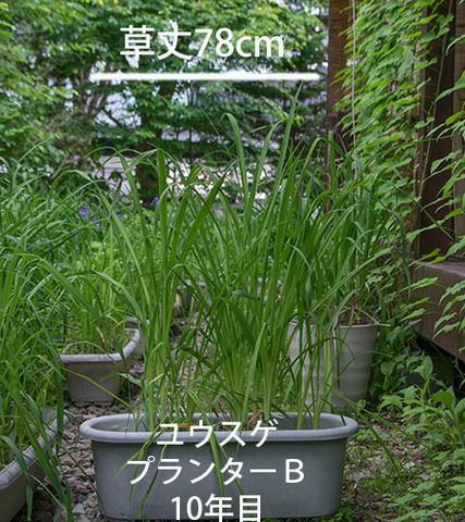 20180609yusuge_planter_10y_B01.jpg