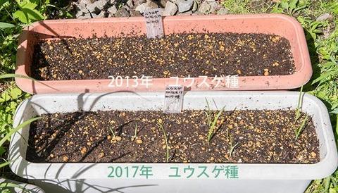 20180609yusuge_planter_1y_2017&2013seed01.jpg
