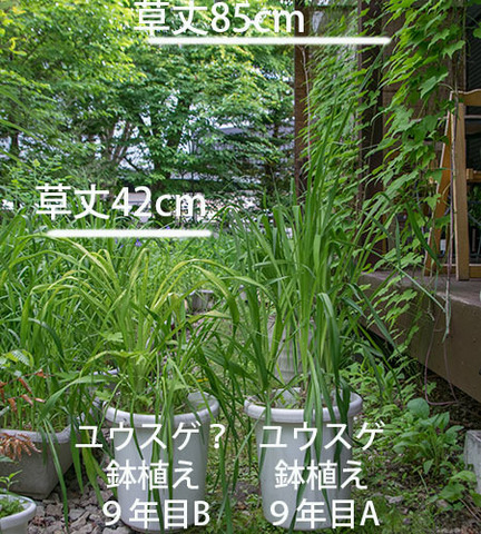 20180609yusuge_pot_9y_A&B-yasuge.jpg