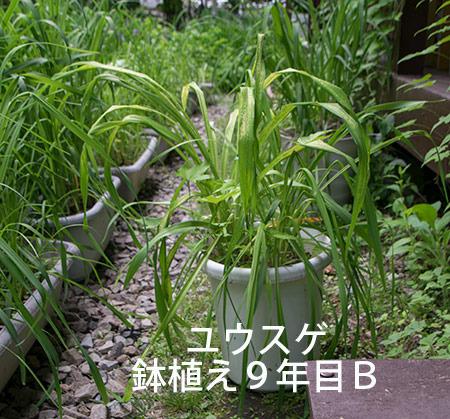 20180613yusuge_pot_9y_B-yasuge01.jpg