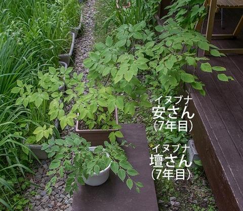 20180614inubuna7y_an_dan_01.jpg