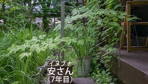 20180614inubuna_7y_an_00.jpg