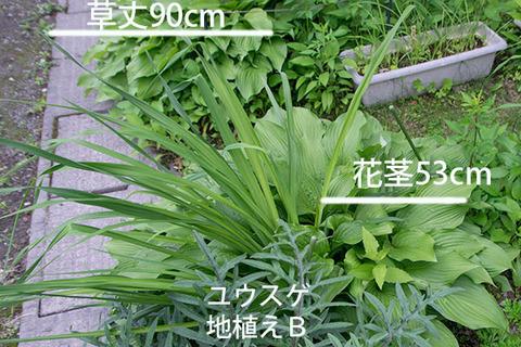 20180618yusuge_jiue_B01.jpg