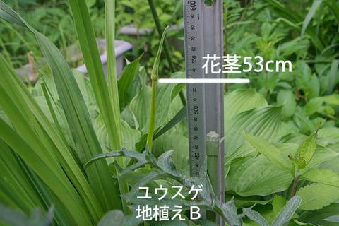 20180618yusuge_jiue_B02.jpg