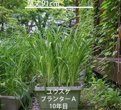 20180618yusuge_planter_10y_A01.jpg