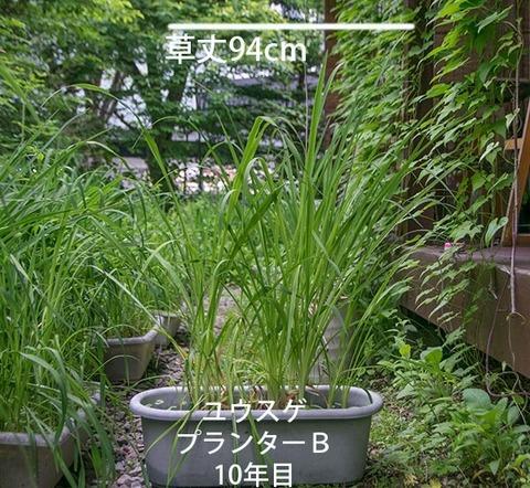 20180618yusuge_planter_10y_B01.jpg