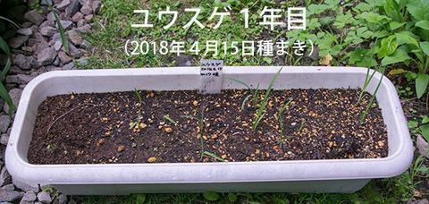 20180618yusuge_planter_1y_20170415.jpg