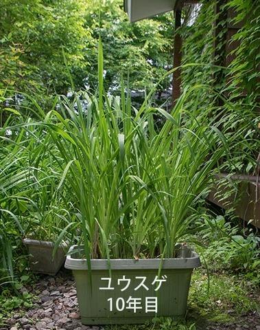 20180621yusuge_planter_10y_A01.jpg