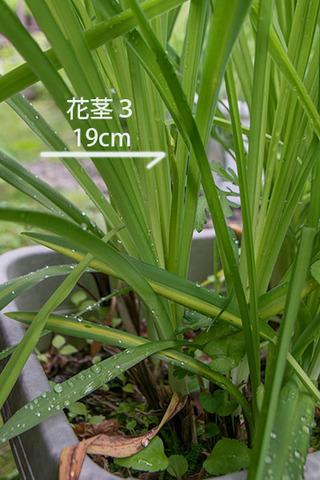 20180621yusuge_planter_10y_A03.jpg