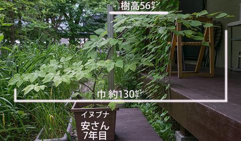 20180629inubuna_7y_an_01.jpg