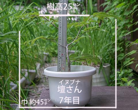 20180629inubuna_7y_dan_01.jpg