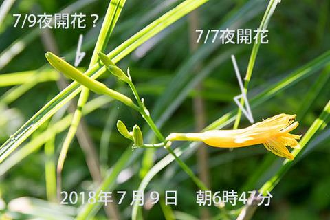 20180709yusuge_jiueB00yasuge_0647.jpg