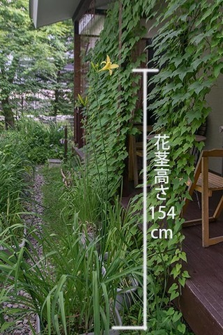 20180711yusuge_planter10y_1607.jpg