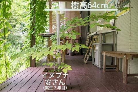20180722inubuna_7y_an_01.jpg
