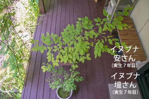 20180805inubuna7y_an_dan_01.jpg
