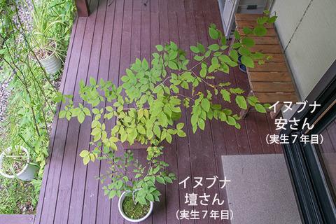 20180812inubuna7y_an_dan_01.jpg