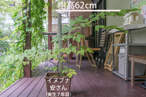 20180812inubuna_7y_an_01.jpg