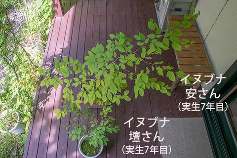 20180819inubuna7y_an_dan_01.jpg