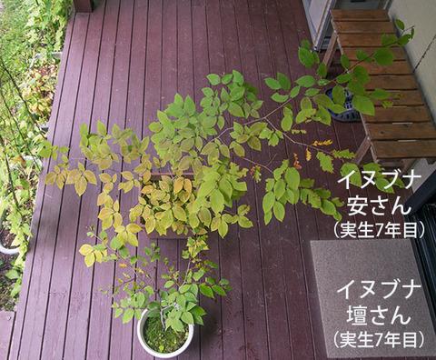 20180909inubuna7y_an_dan_01.jpg