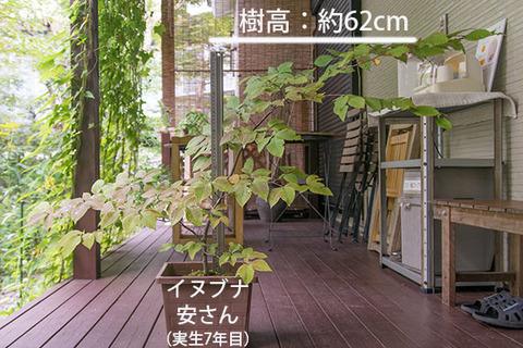 20180909inubuna_7y_an_01.jpg