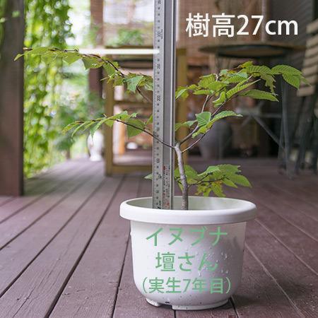 20180909inubuna_7y_dan_01.jpg
