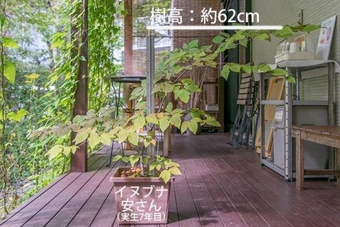 20180916inubuna_7y_an_01.jpg