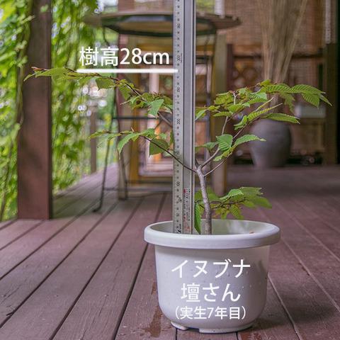 20180916inubuna_7y_dan_01.jpg