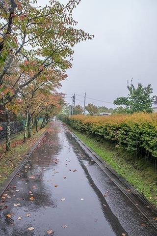 20180921yagasaki-sakura03.jpg