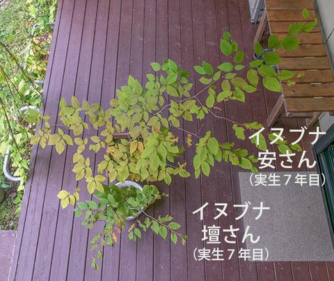 20180923inubuna7y_an_dan_01.jpg