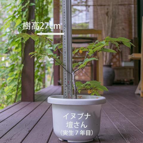 20180923inubuna_7y_dan_01.jpg