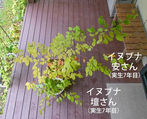 20180930inubuna7y_an_dan_01.jpg