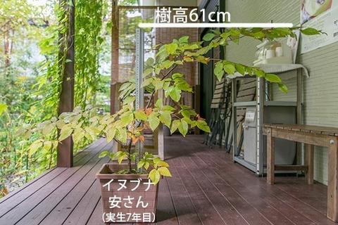 20180930inubuna_7y_an_01.jpg
