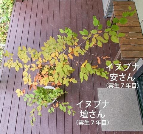 20181007inubuna7y_an_dan_01.jpg