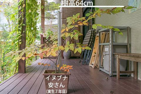 20181007inubuna_7y_an_01.jpg