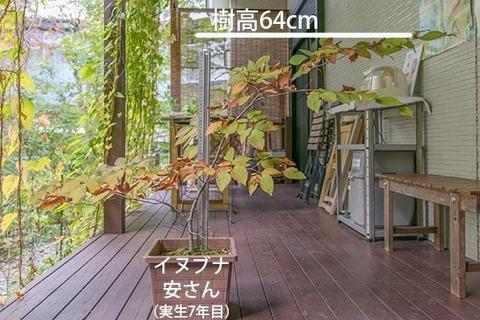 20181014inubuna_7y_an_01.jpg