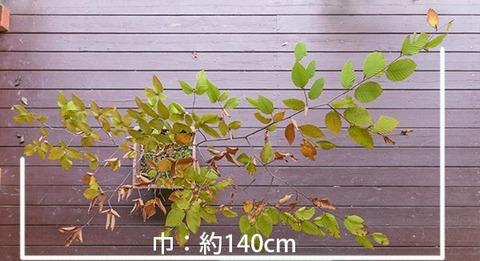 20181014inubuna_7y_an_02.jpg