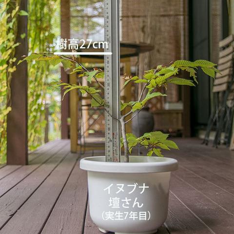 20181014inubuna_7y_dan_01.jpg