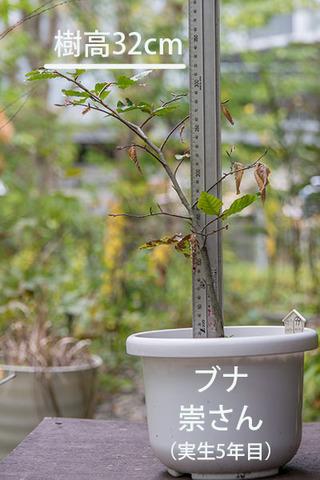 20181015buna_su_5y_01.jpg