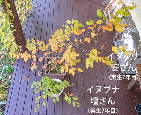 20181021inubuna7y_an_dan_01.jpg