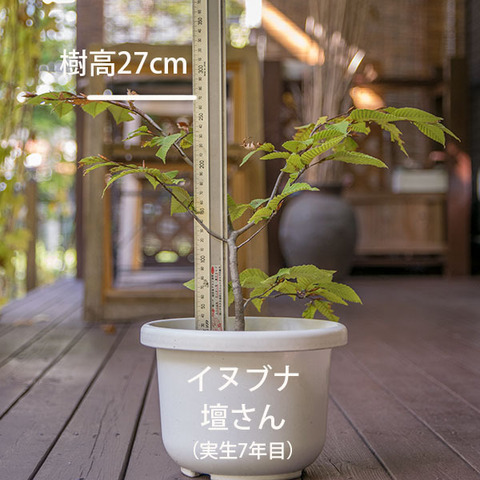 20181021inubuna_7y_dan_01.jpg