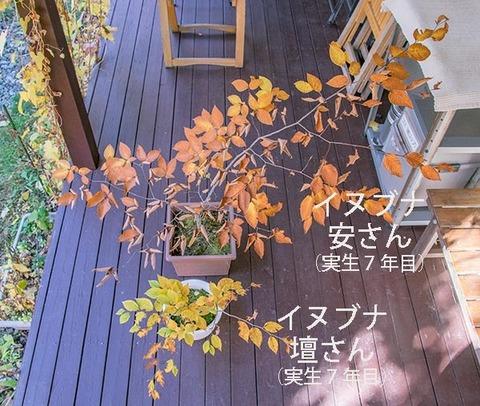20181028inubuna7y_an_dan_01.jpg