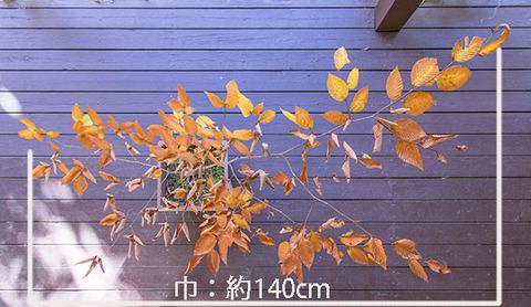 20181028inubuna7y_an_dan_02.jpg