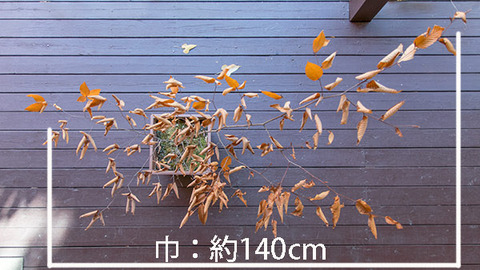 20181104inubuna7y_an_02.jpg