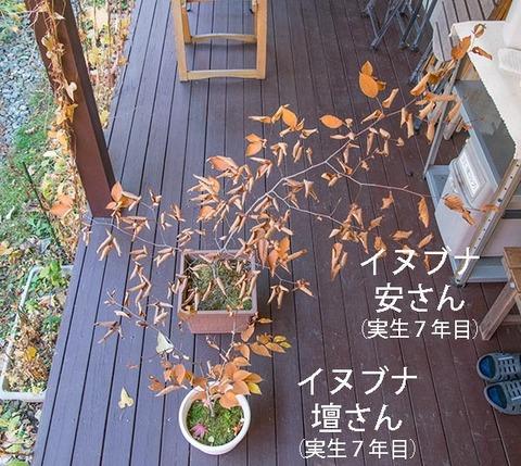 20181104inubuna7y_an_dan_01.jpg
