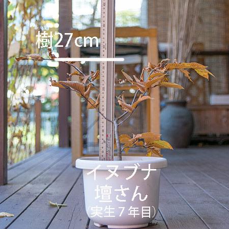 20181104inubuna_7y_dan_01.jpg