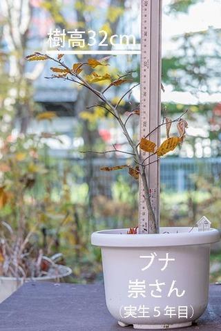 20181105buna_su_5y_01.jpg