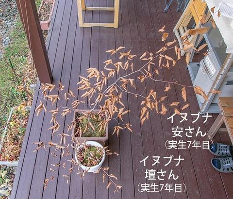 20181111inubuna7y_an_dan_01.jpg